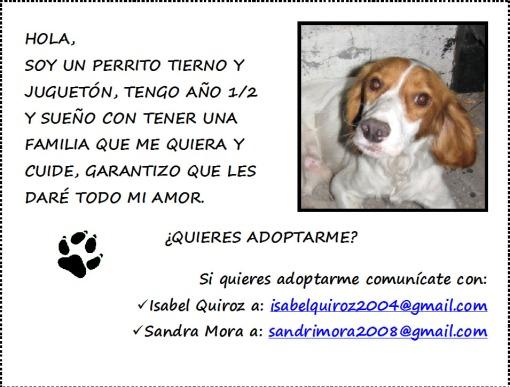 aviso_perro