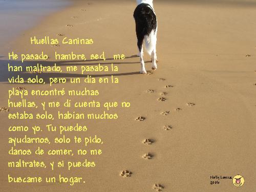 huella_canina_amarilla